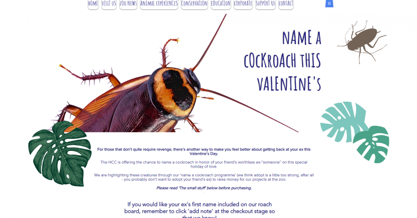 Name A Cockroach After Your Ex - Blog - K100